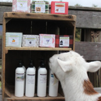 Southern Sass goat milk lotion and soap